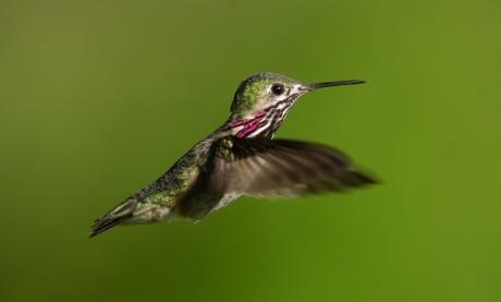 Como Funciona o Google Hummingbird: O Que Aprendemos ao Analisar 9 Milhões de Palavras