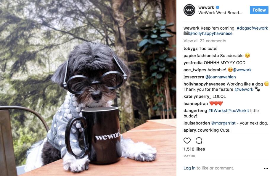 dogsofwework Instagram photos and videos