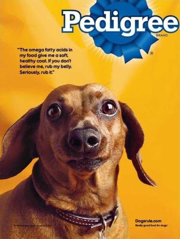 publicidade da marca Pedigree