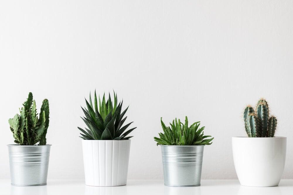 vasos decorativos com plantas em fundo branco