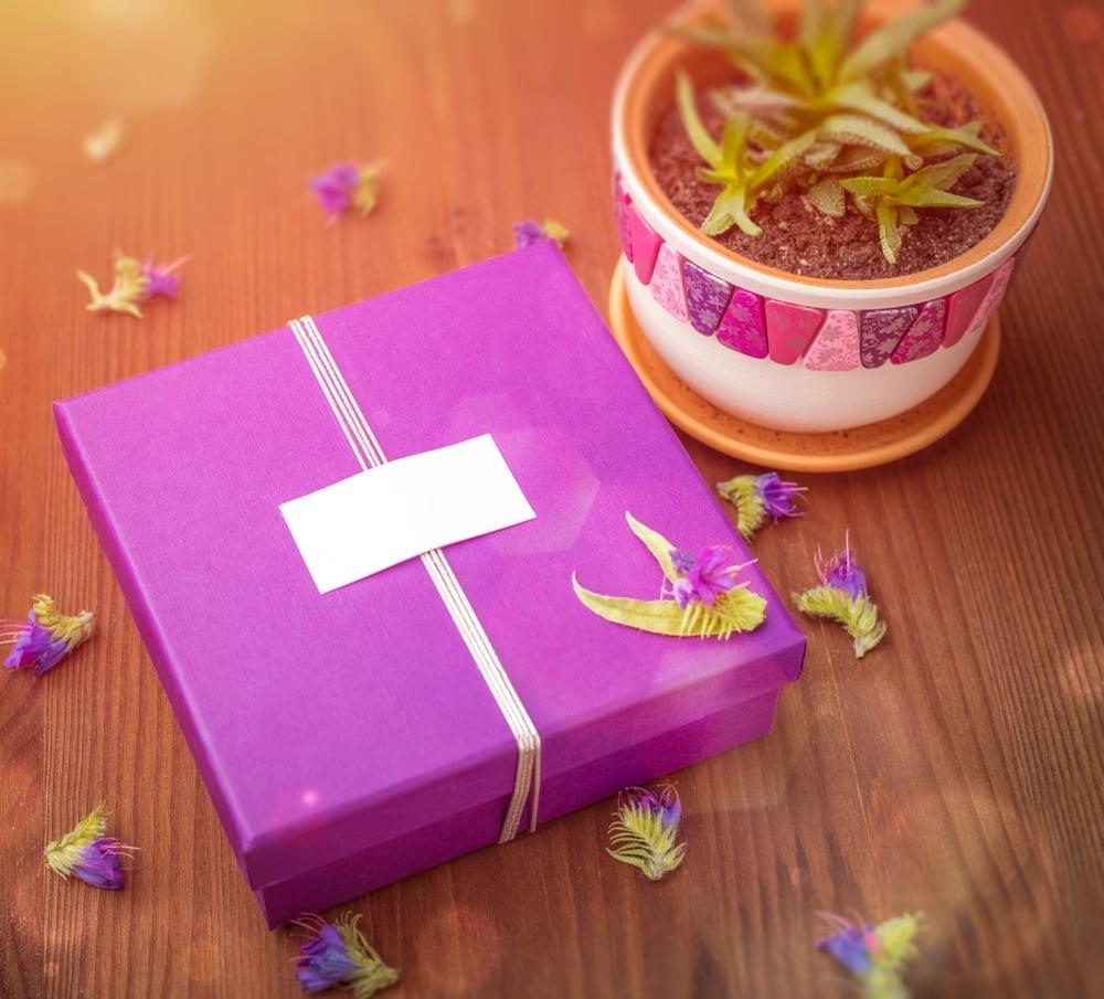 caixa embrulhada para presente com vaso de plantas ao lado simbolizando sorteio de instagram