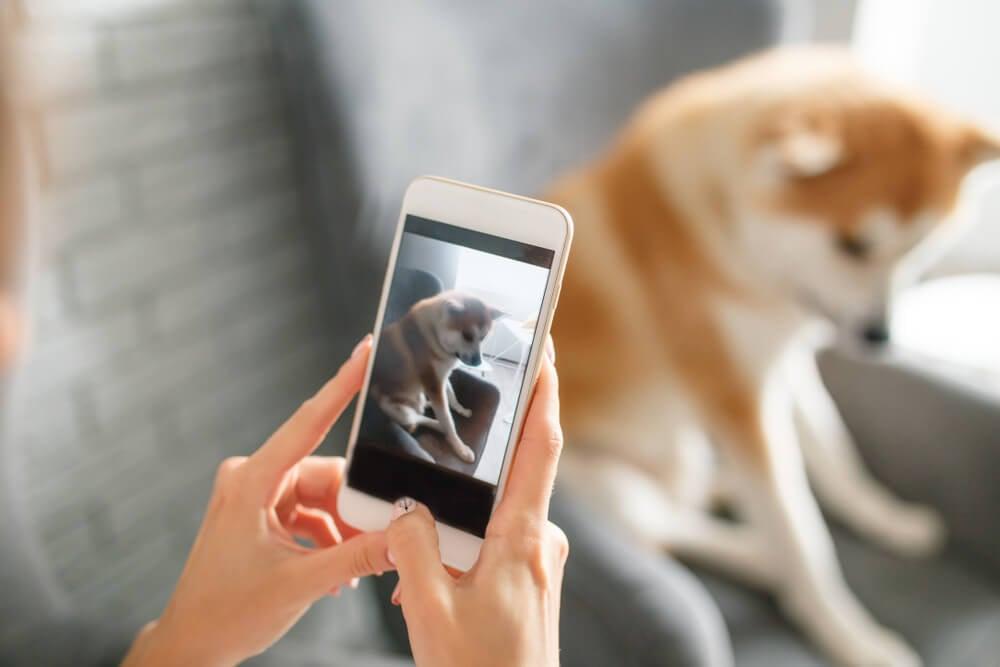 maos femininas tirando foto de pet com smartphone