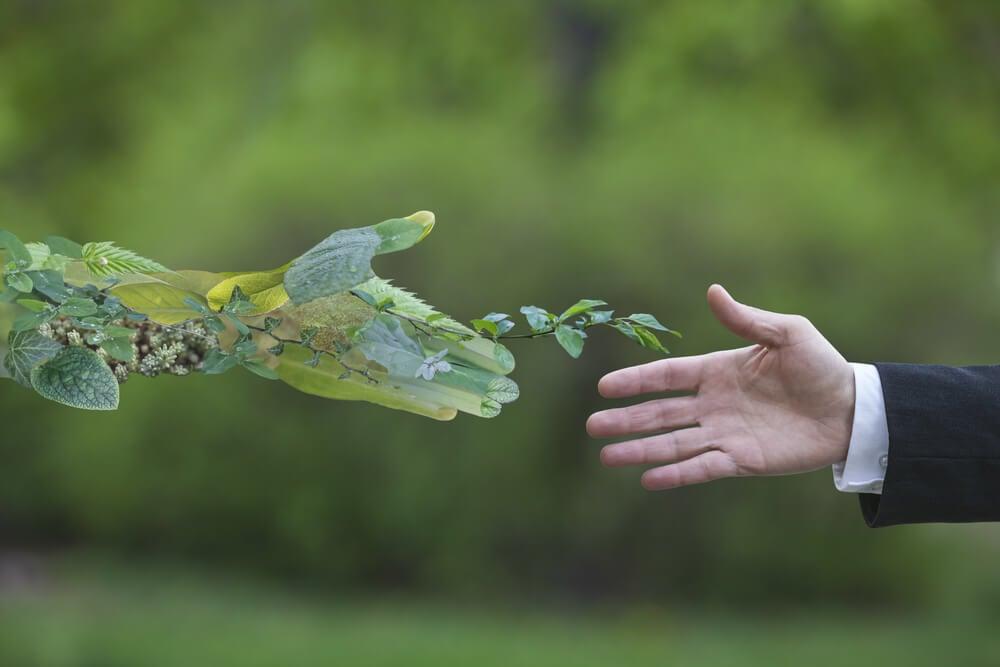quando e onde surgiu o termo greenwashing