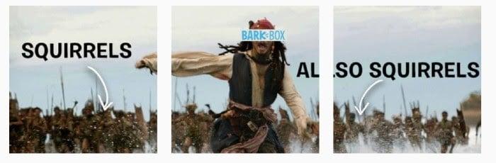 BarkBox Instagram Meme für Marketing