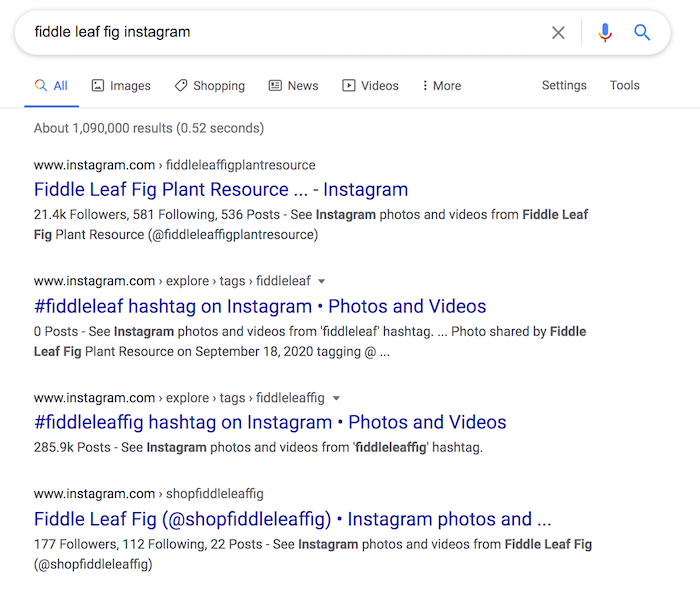 Instagram SEO Google results for fiddle leaf fig instagram